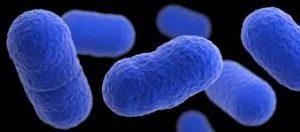 protocole désinfection fruits legumes